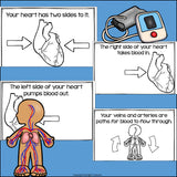 Human Body Systems: Circulatory System Mini Book for Early Readers