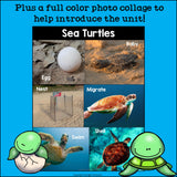 Sea Turtles Mini Book for Early Readers