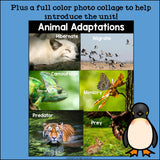 Animal Adaptations Mini Book for Early Readers