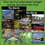 The Marsh Mini Book for Early Readers: Marsh Animals