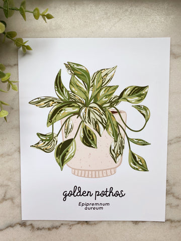 Golden Pothos Plant Art Print