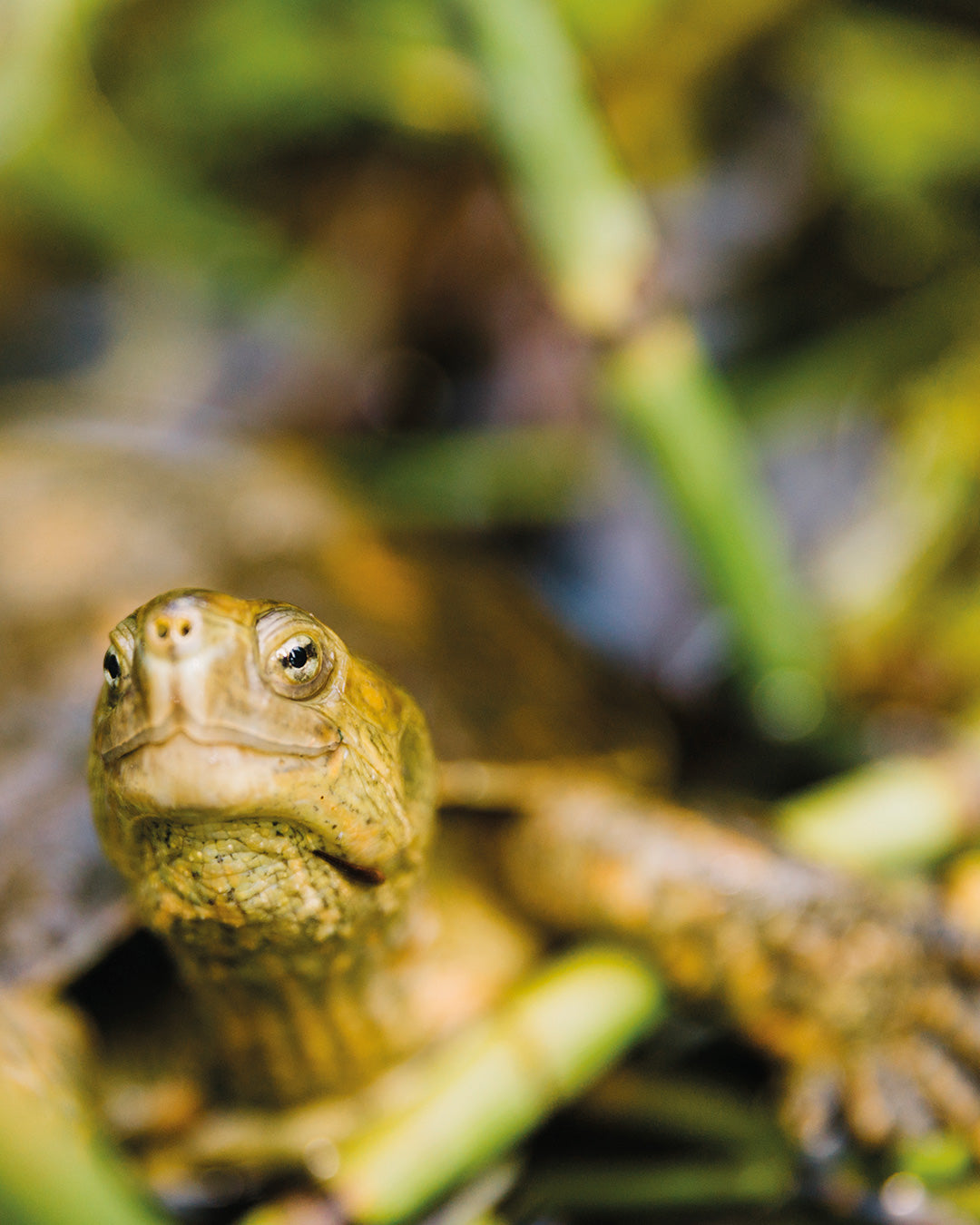 How Natura's Andiroba helps turtles in the Amazon