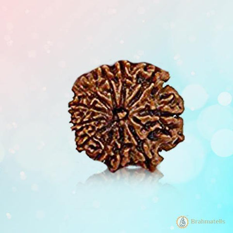 Rudraksh 11 Mukhi tan-brown BT11R127SM