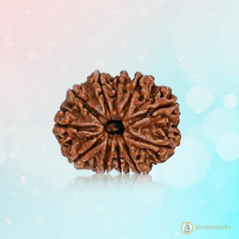 Rudraksh 11 Mukhi dark-brown BT11R128SM