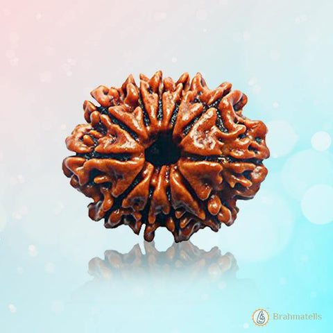 Rudraksh 11 Mukhi reddish-brown BT11R129SM
