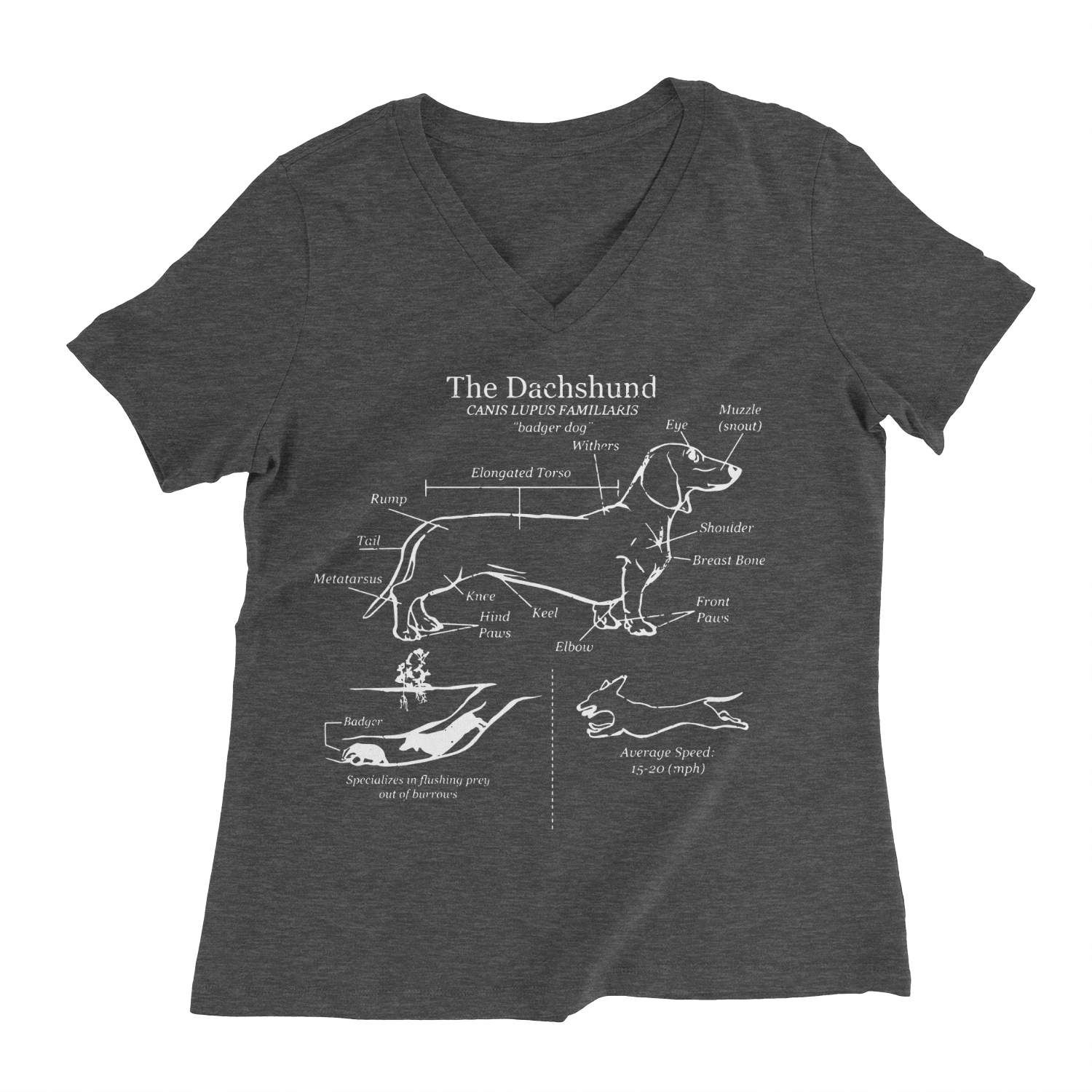 Dachshund Anatomy Blueprint Ladies V-Neck Tee