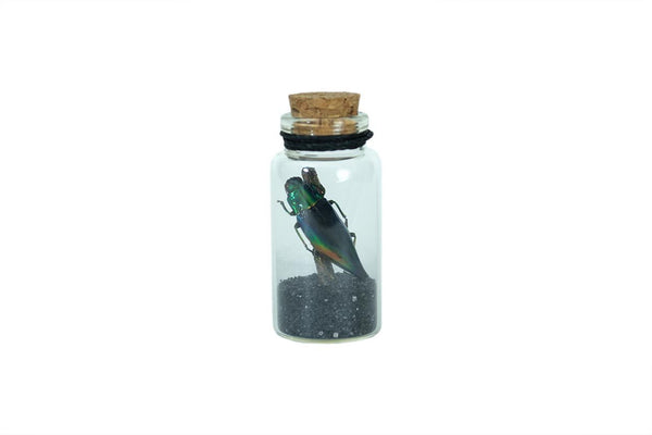 Green Jewel Beetle Curio Bottle - Seidora