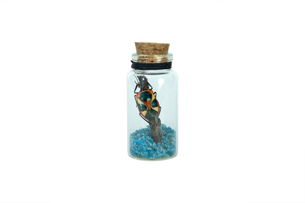 Harlequin Bug Curio Bottle - Seidora