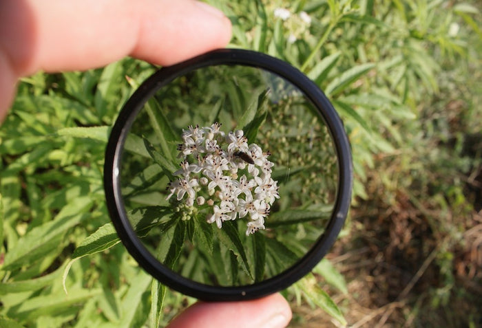 UV lens filter pointed to the flower inside grass
