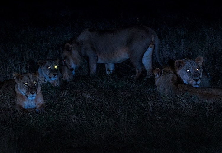 6 Tips to Shoot Wildlife Photos at Night with Camera Trigger