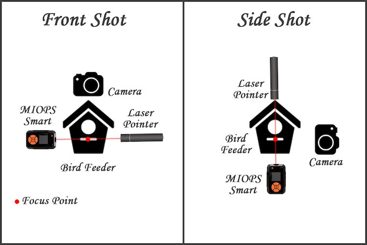 ​How to Take Bird Photos with Laser Trigger Setup