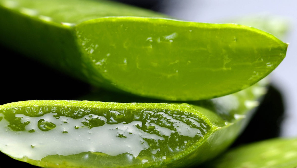 The Miracles of Aloe Vera in Your Skincare