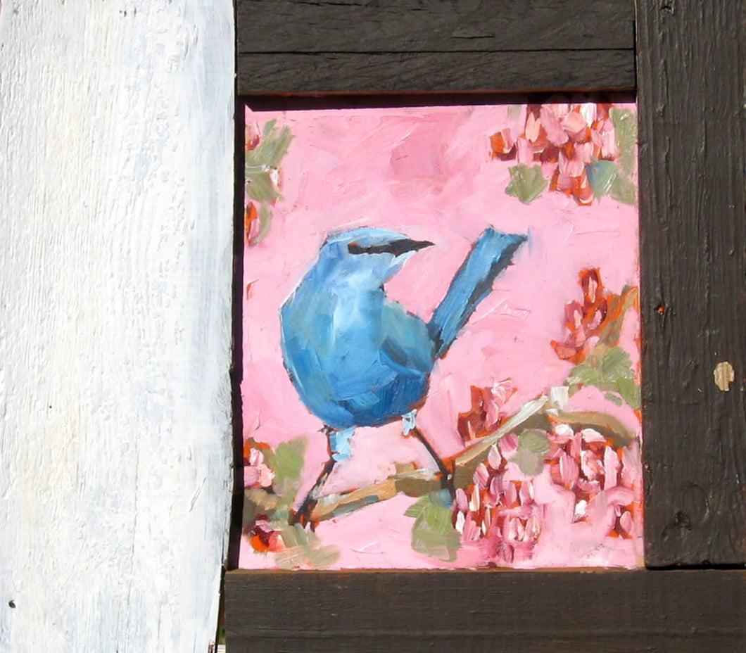 Blue wren on a pink background with red berries.