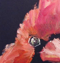 "Load image into Gallery viewer, Red Cardinal Oil Painting on Black Gesso Canvas, 5"" x 7"""