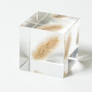 Sola Cube Bunny Tail Grass