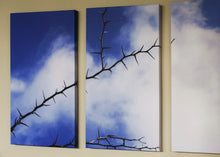 Load image into Gallery viewer, Thorns on High canvas print of thorns against heaven blue sky