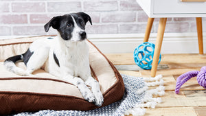 Pet Beds: More Than Just a Box