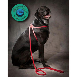 Harness Lead, 6-ft Black size Large at NJPetSupply.com