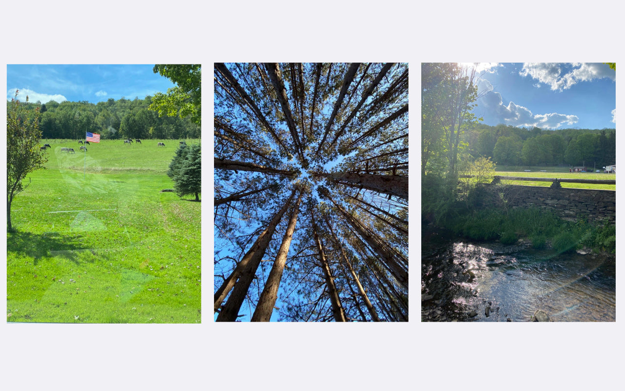 3 images of trees, field, nature