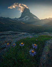Canvas Print of Matterhorn during summer sunset with flowers