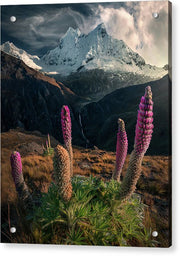 Life of the Andes - Acrylic Print