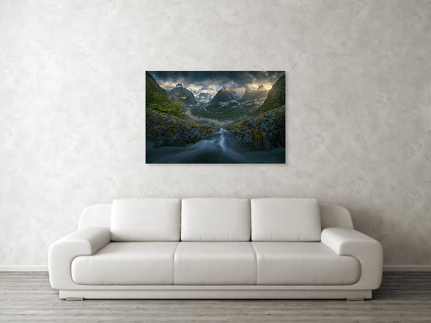 New Zealand Rainforest - Canvas Print