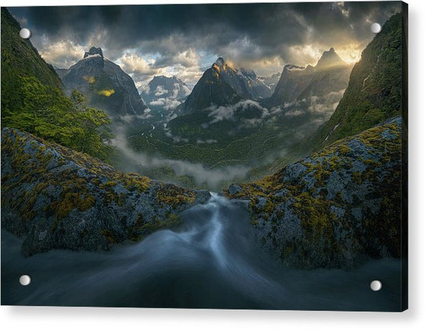 New Zealand Rainforest - Acrylic Print