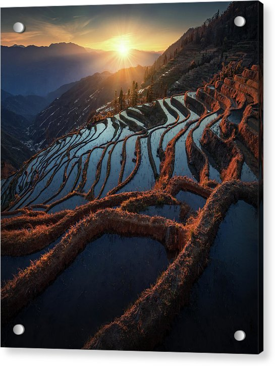 Terraces of China - Acrylic Print