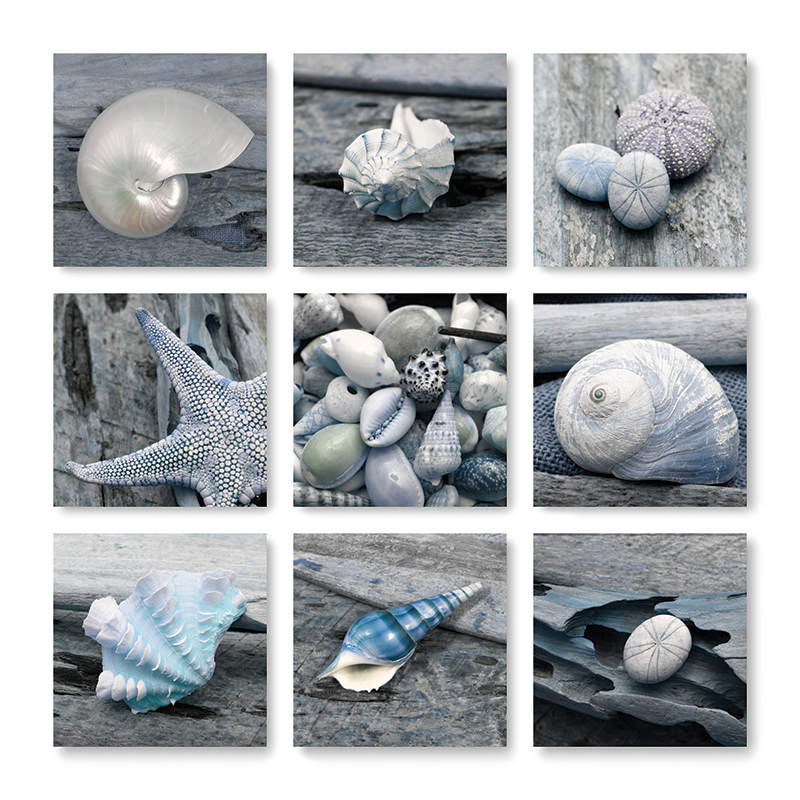 boardwalk shell collage