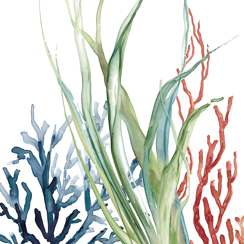 colorful corals 02