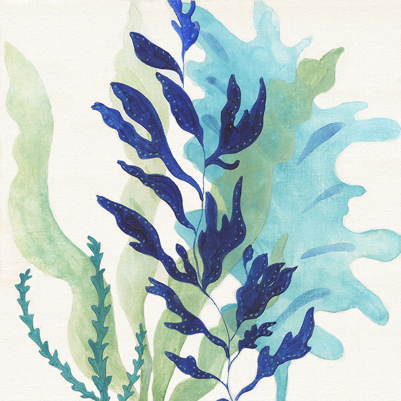 watercolor kelp 02