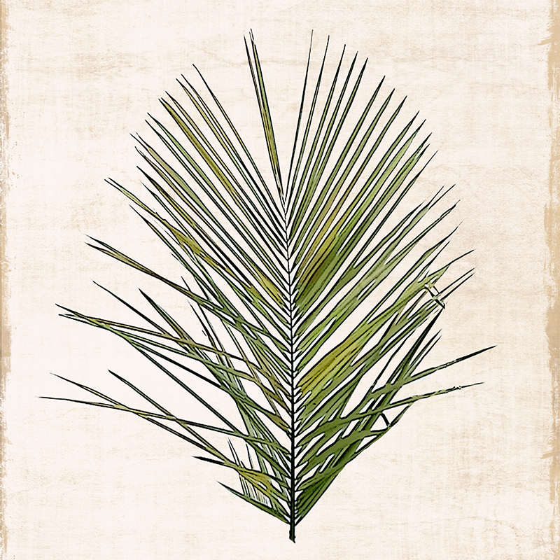 botanical illustration ~ palm 01