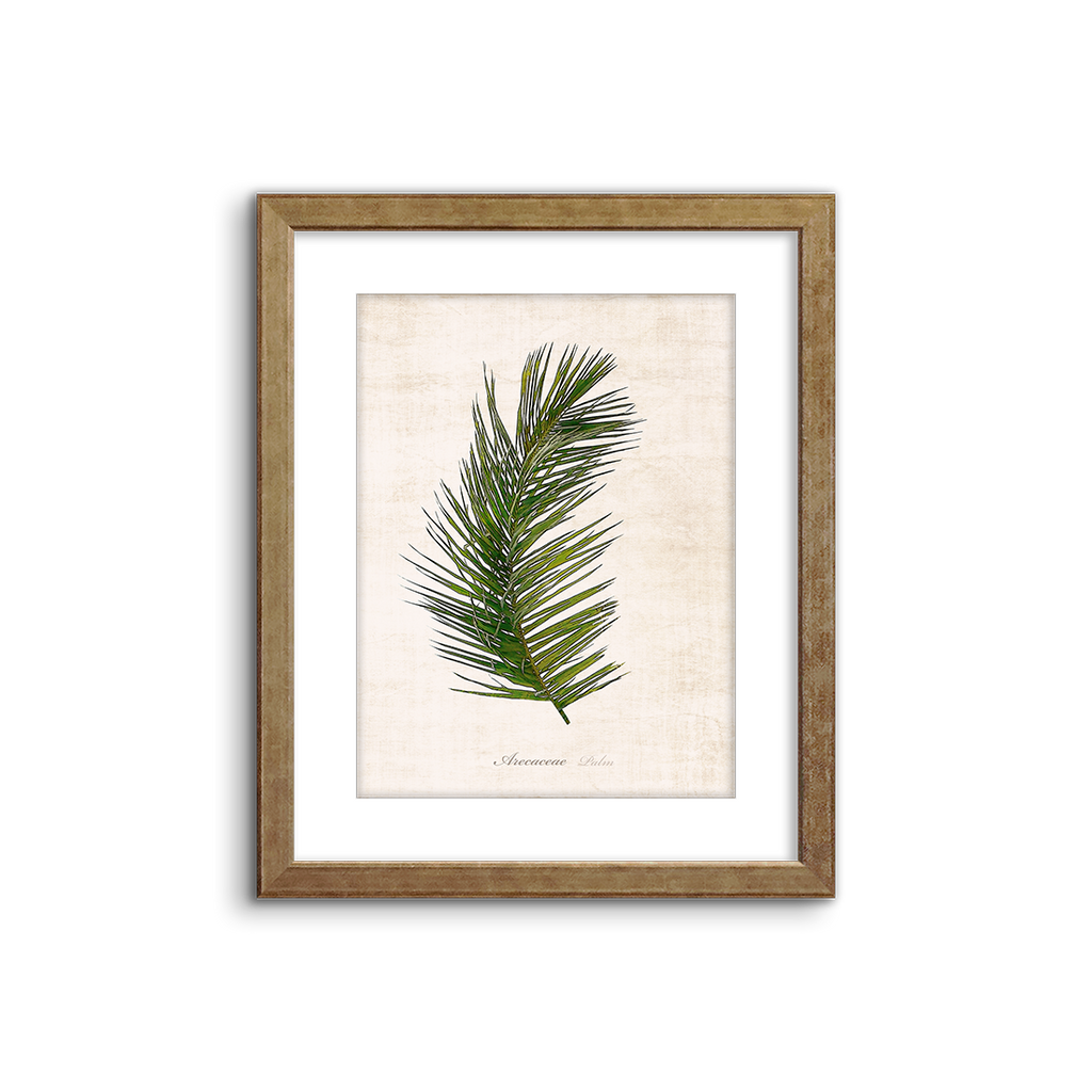 botanical illustration ~ palm 02