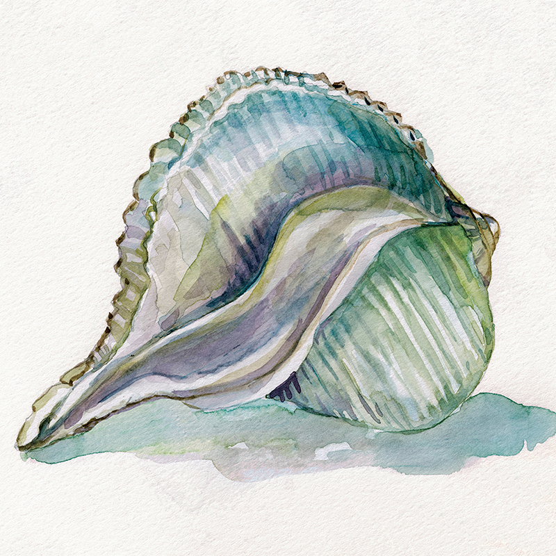 watercolor shell 01