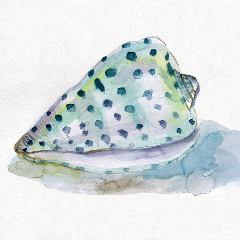 watercolor shell 02