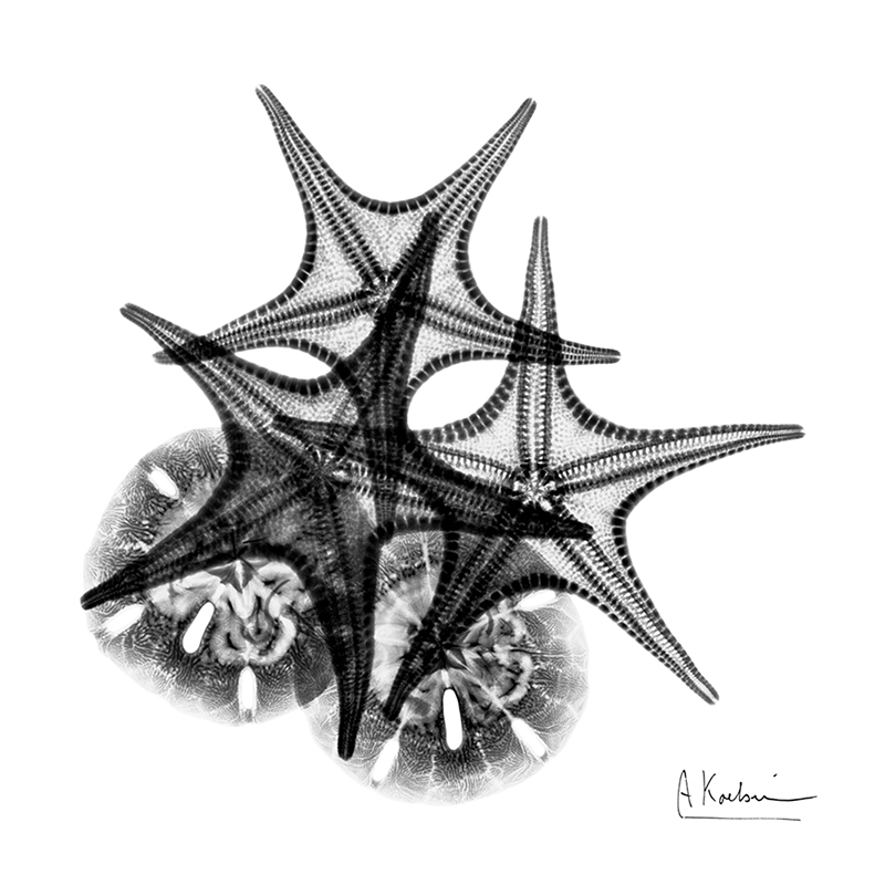x-ray sea star