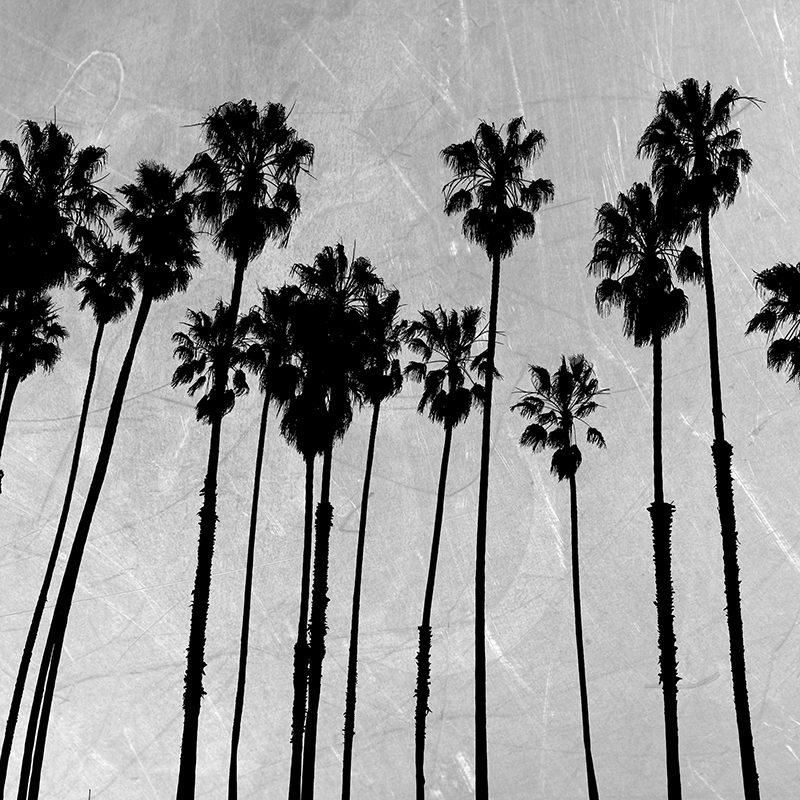 silver palm silhouettes