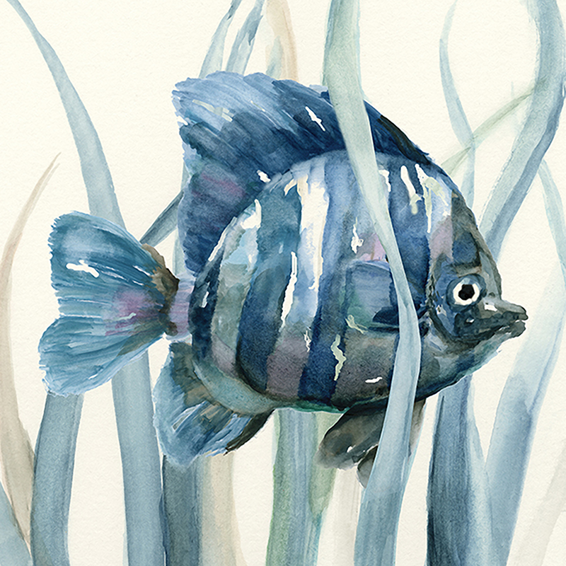 blue kelp fish 01