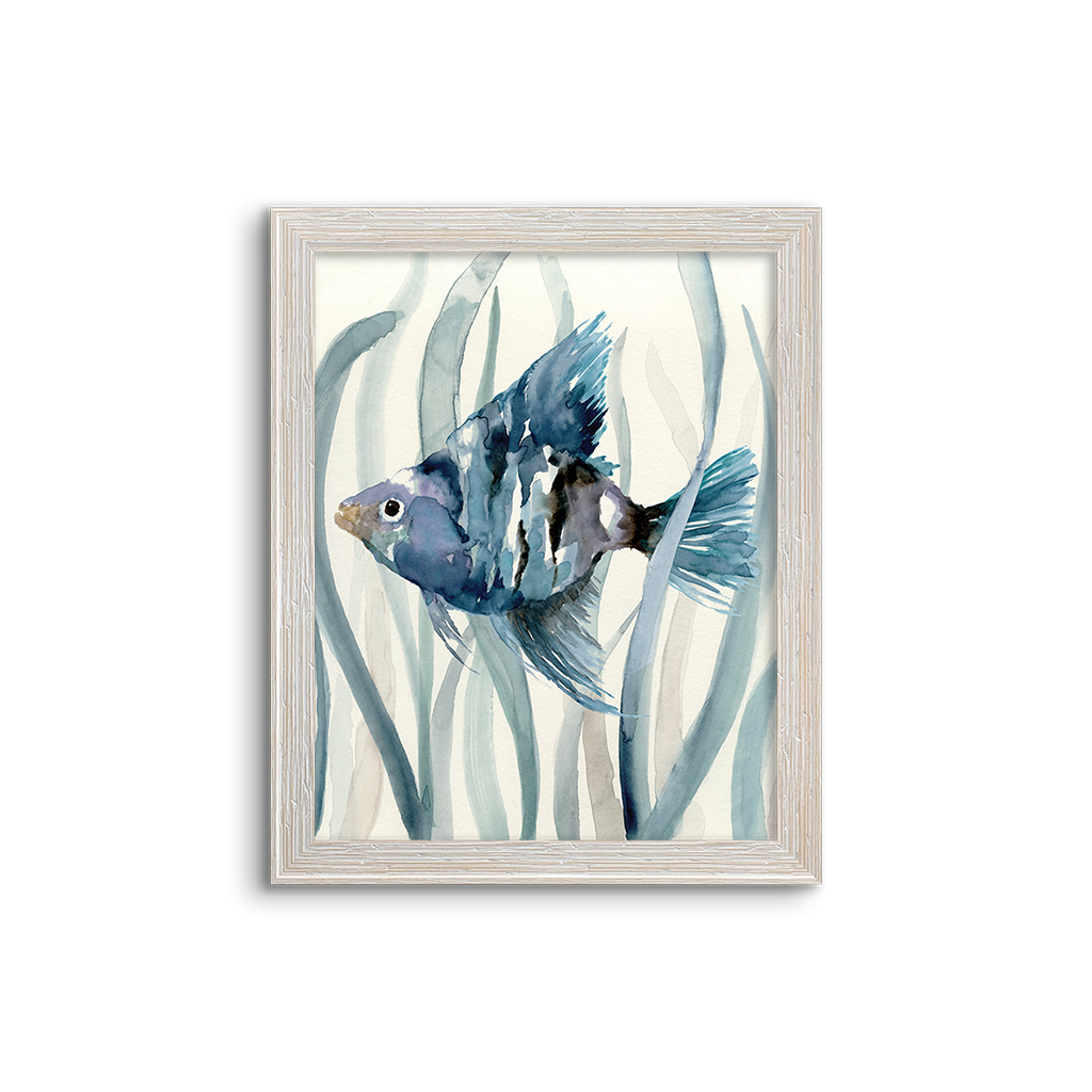 blue kelp fish 02