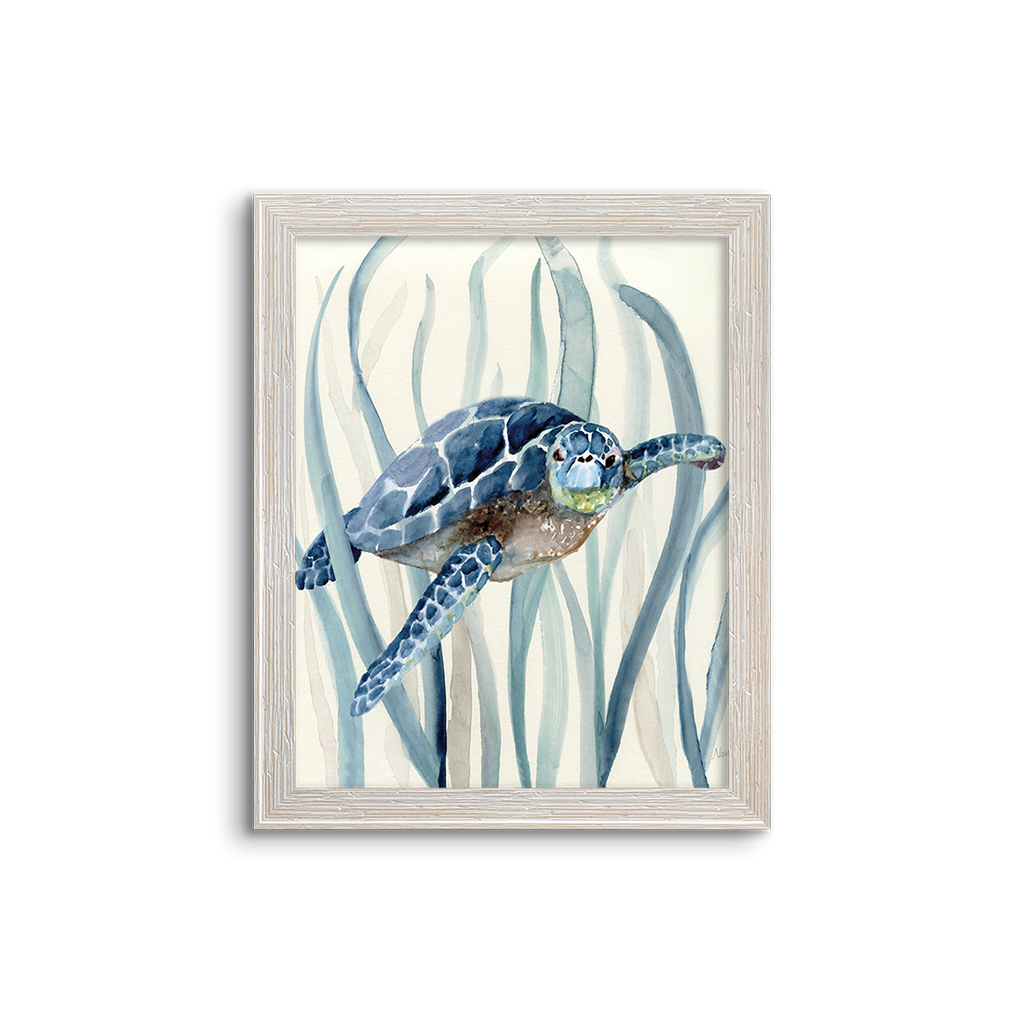 blue kelp turtle 01