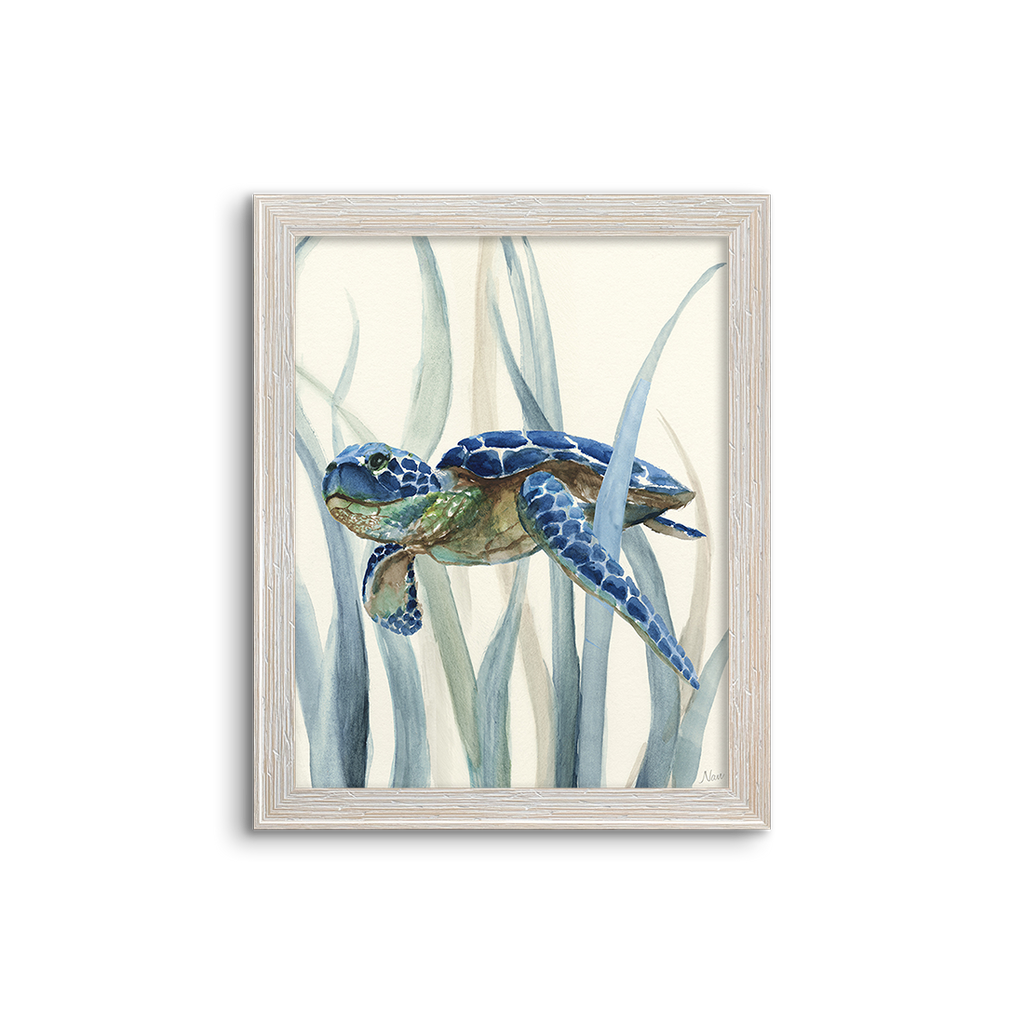 blue kelp turtle 02
