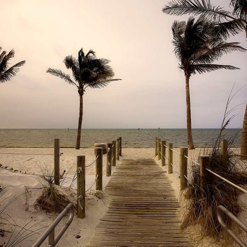 palm breeze path