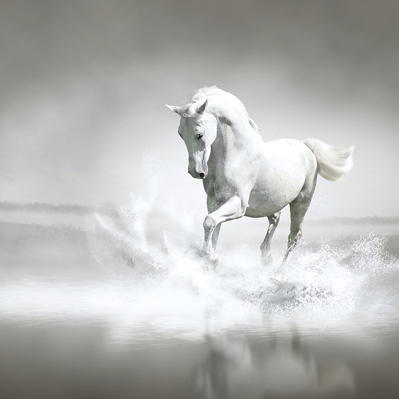 horse through water