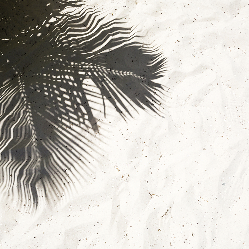 palm shadow 01