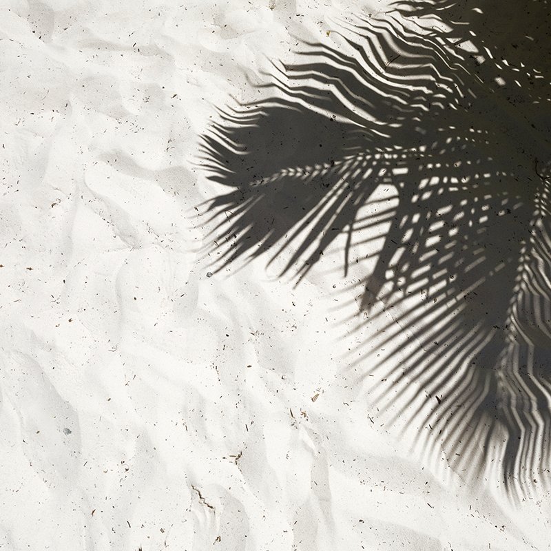 palm shadow 02