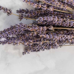 Lavender flowers used to make essential oils for 811 Absoluto copycat fragrances by Match Perfumes