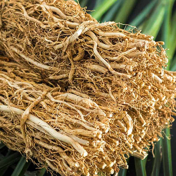 Bundles of vetiver used to make essential oils for Ciel d'Opale copycat fragrances by Match Perfumes