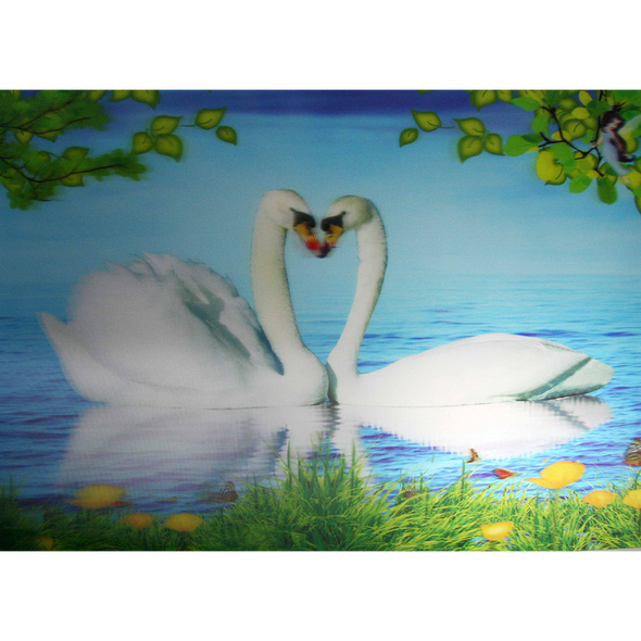 Pair of White Swans making a heart shape - 3D Lenticular Poster - 12x16 Print