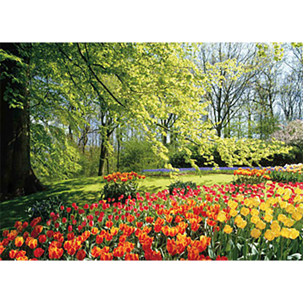 Tulip Floral Garden Peaceful and Tranquil - 3D Lenticular Poster - 12x16 Print