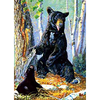 Black Bear with cub - Triple Views - 3D Action Lenticular Poster - 12x16 - 3 Prints in 1